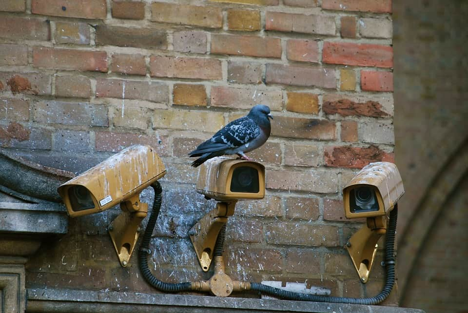 Security Tips pigeon and home security cameras outside brick home